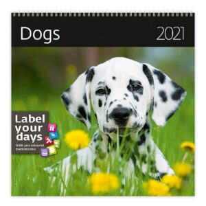Calendrier mural 30x30 Dogs 2021