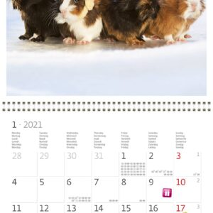 Calendrier mural 30x30 Little Fun 2021 Janvier