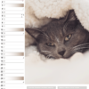 Calendrier mural Cats 2021 janvier