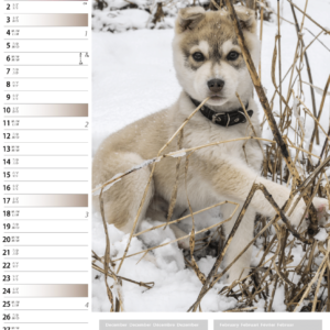 Calendrier mural Dogs 2021 Janvier