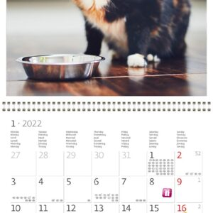 Calendrier mural Cats 2022 Janvier