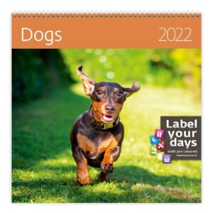 Calendrier mural Dogs 2022