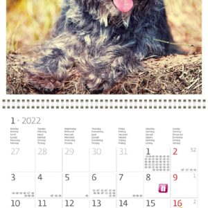 Calendrier mural Dogs 2022 Janvier